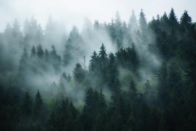 oposiciones brigadas forestales